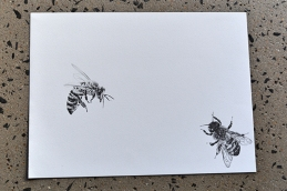 Graphite pencil illustration of bees