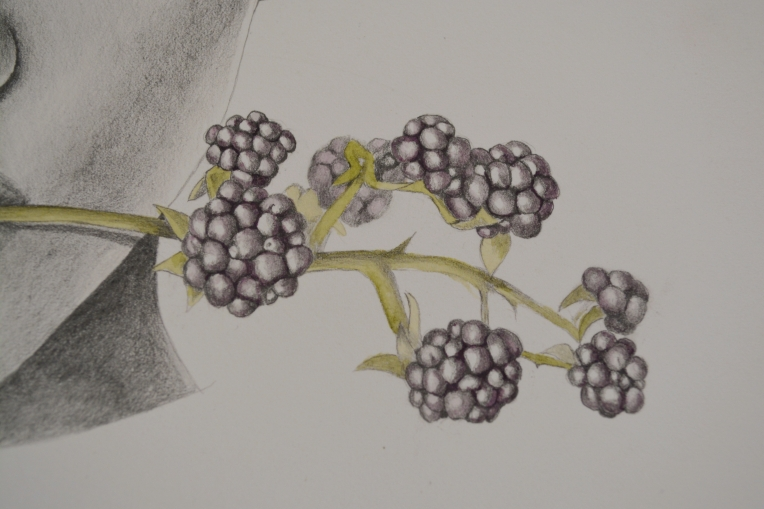 blackberries color 3