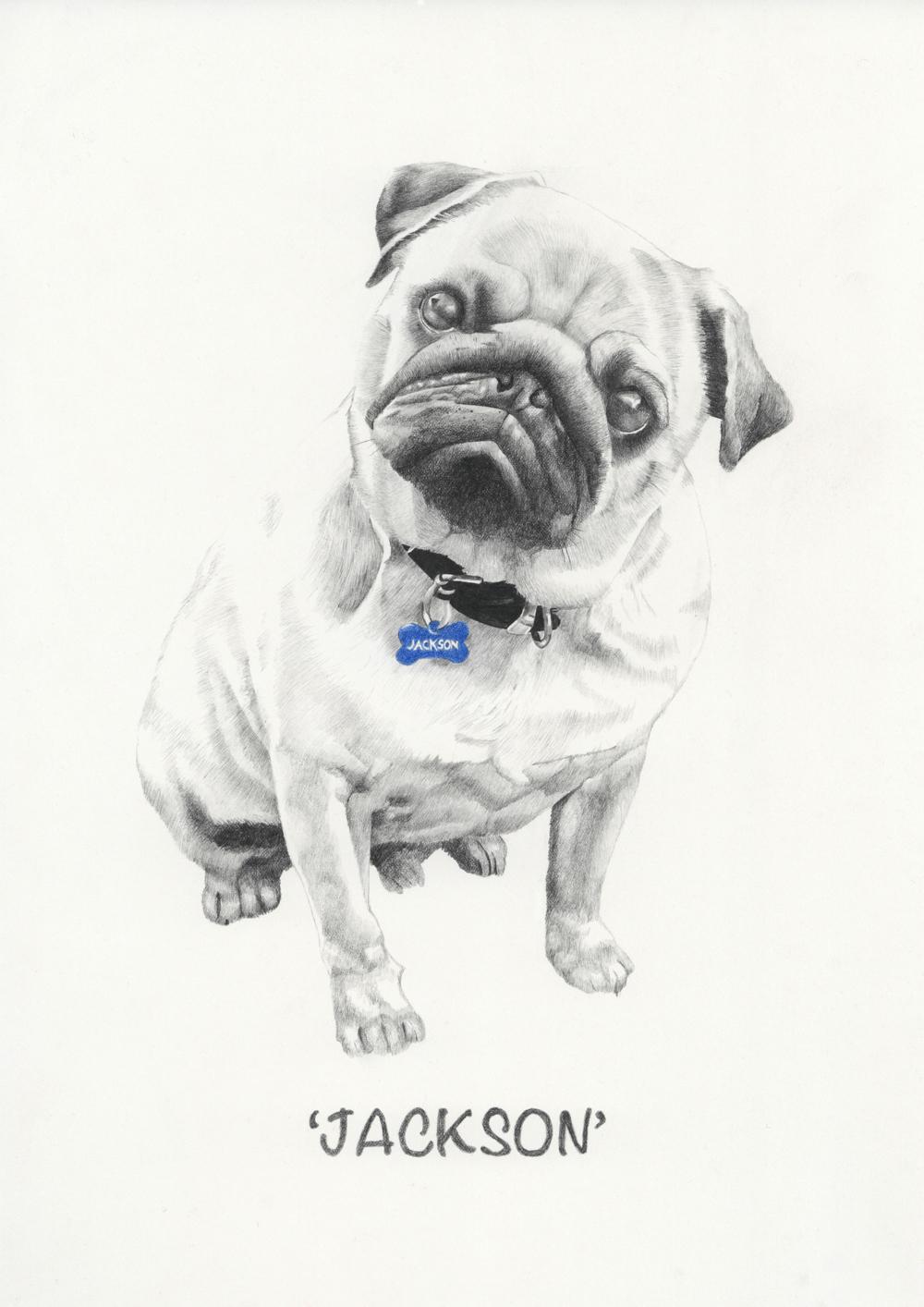 """""""Jackson"""" - graphite pencil custom pet portrait by Alison Sargent"""
