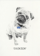 """Jackson"" - Graphite pencil custom pet portrait"