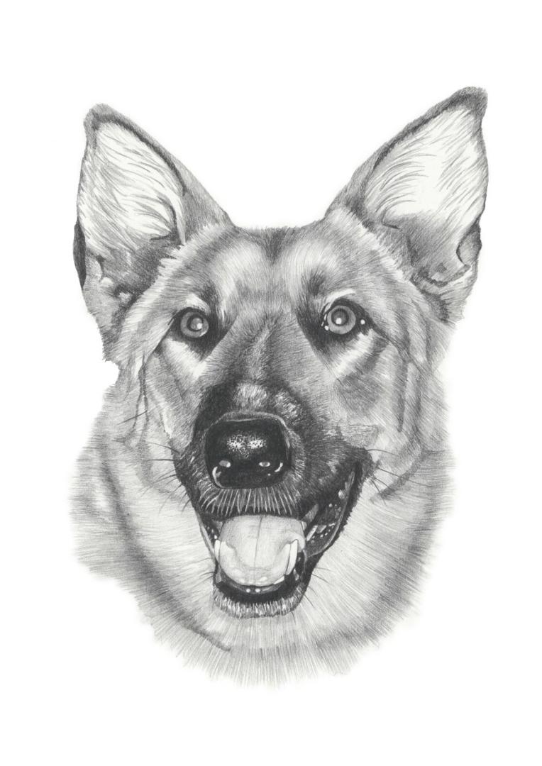 Graphite pencil illustration